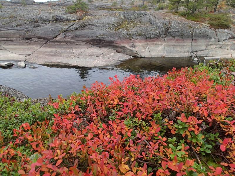 Harmaa kallio korostaa ruskan värejä