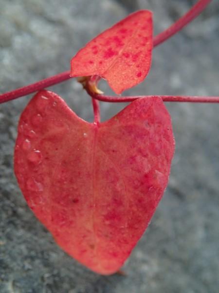 Luonnon sydän