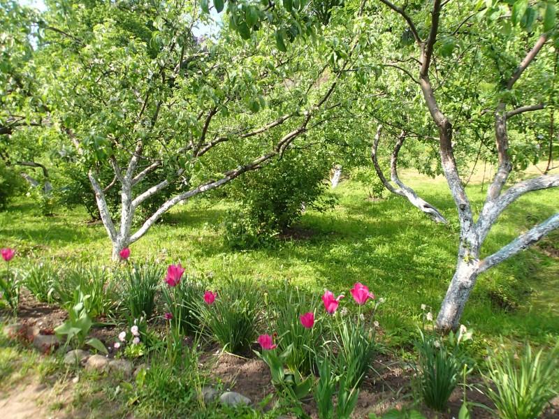 Valamon puutarhassa on rauhallista