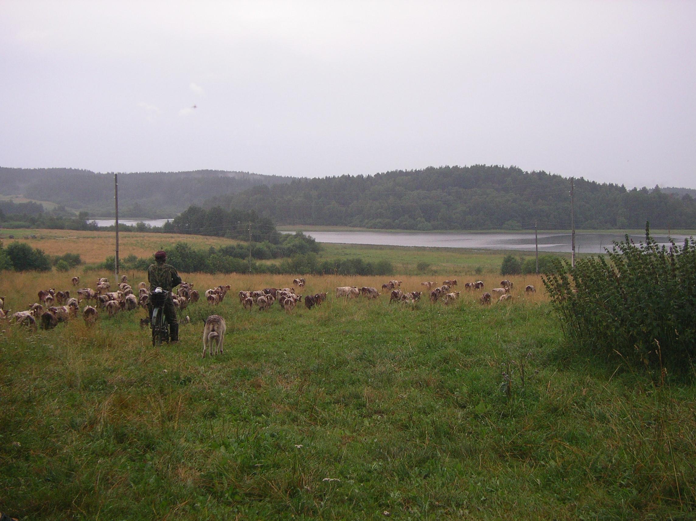 30-lehmapaimen